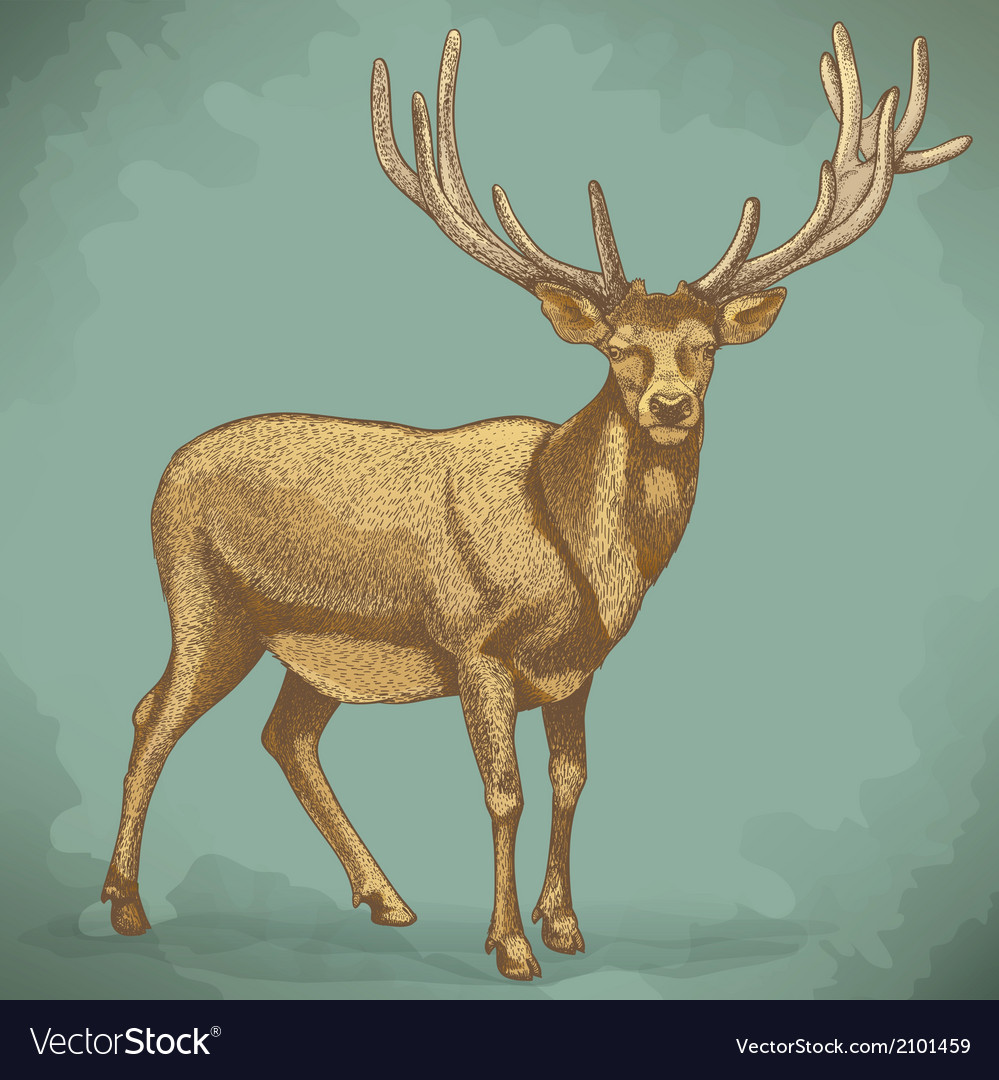 Engraving reindeer retro vector | Price: 1 Credit (USD $1)