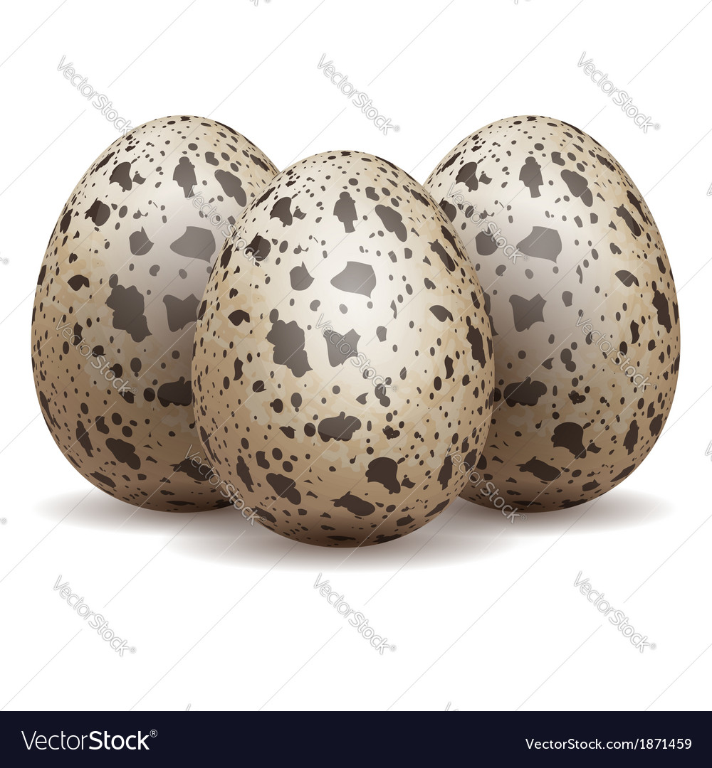 Quail eggs isolated vector | Price: 1 Credit (USD $1)