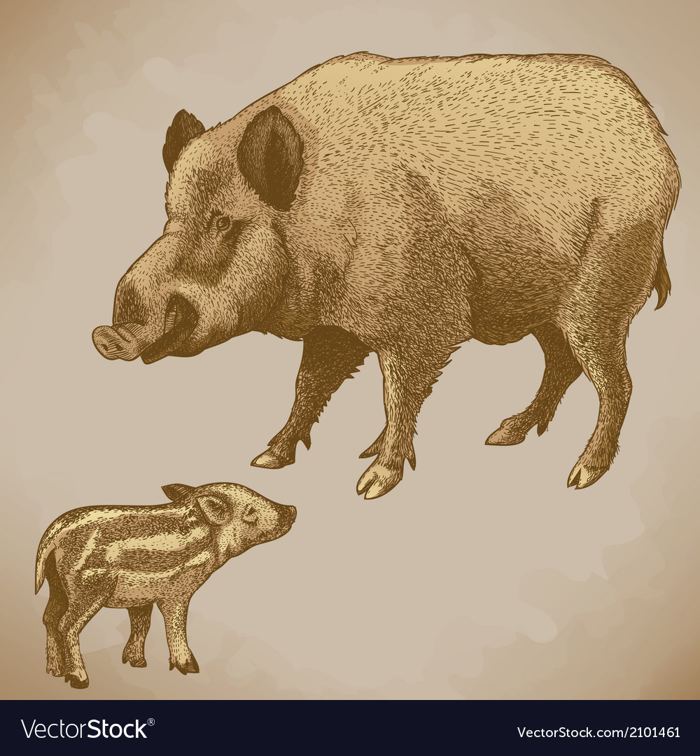 Engraving boar retro vector | Price: 1 Credit (USD $1)