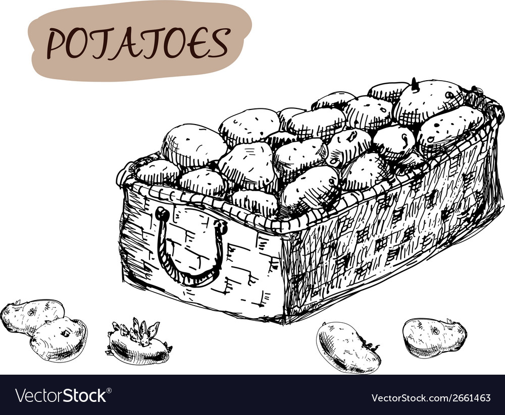 Potatoes vector | Price: 1 Credit (USD $1)