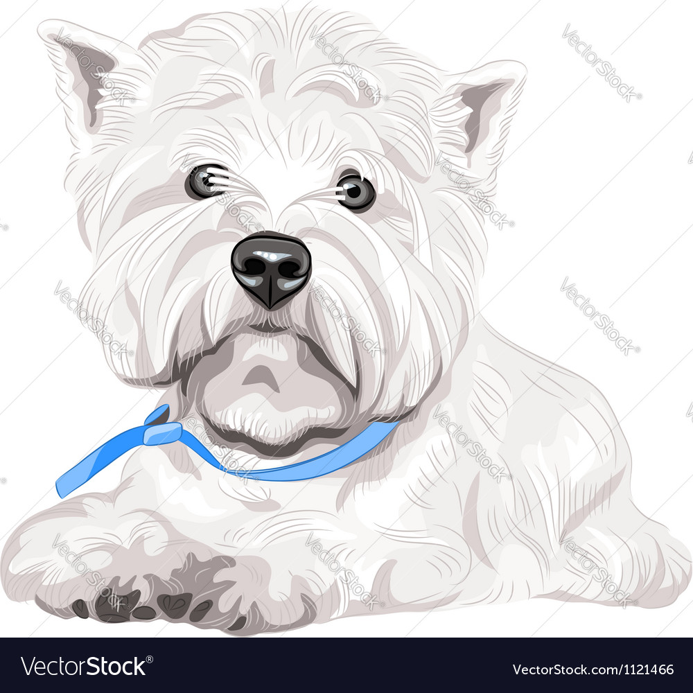 Dog west highland white terrier breed vector | Price: 1 Credit (USD $1)