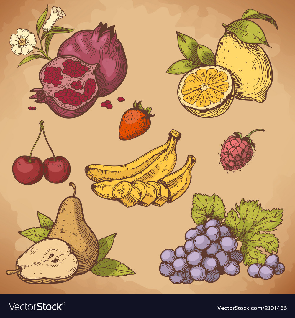 Icon fruits retro vector | Price: 1 Credit (USD $1)