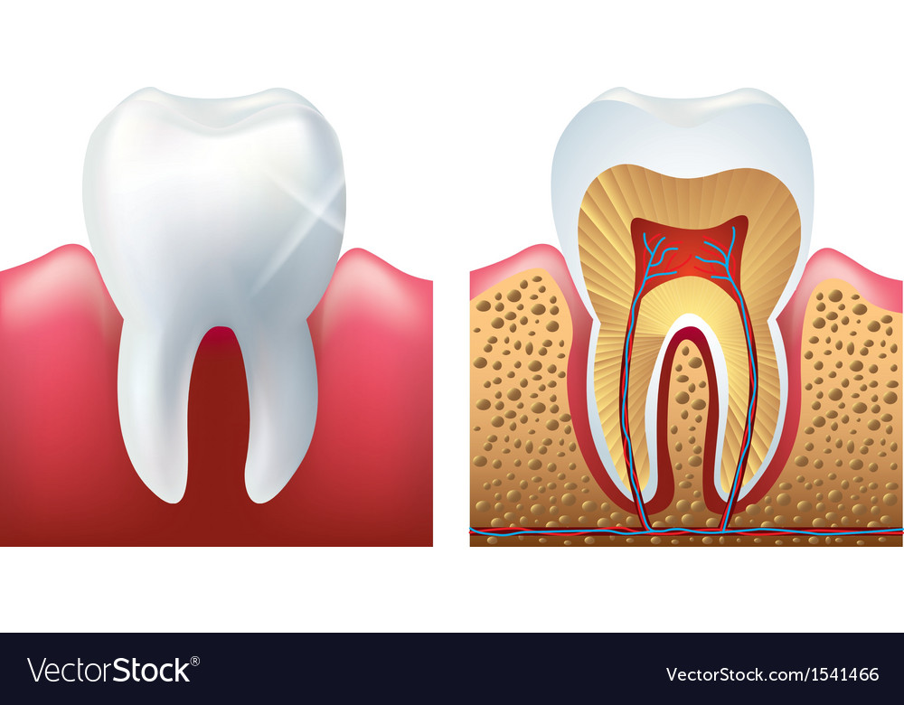 Tooth cut vector | Price: 1 Credit (USD $1)