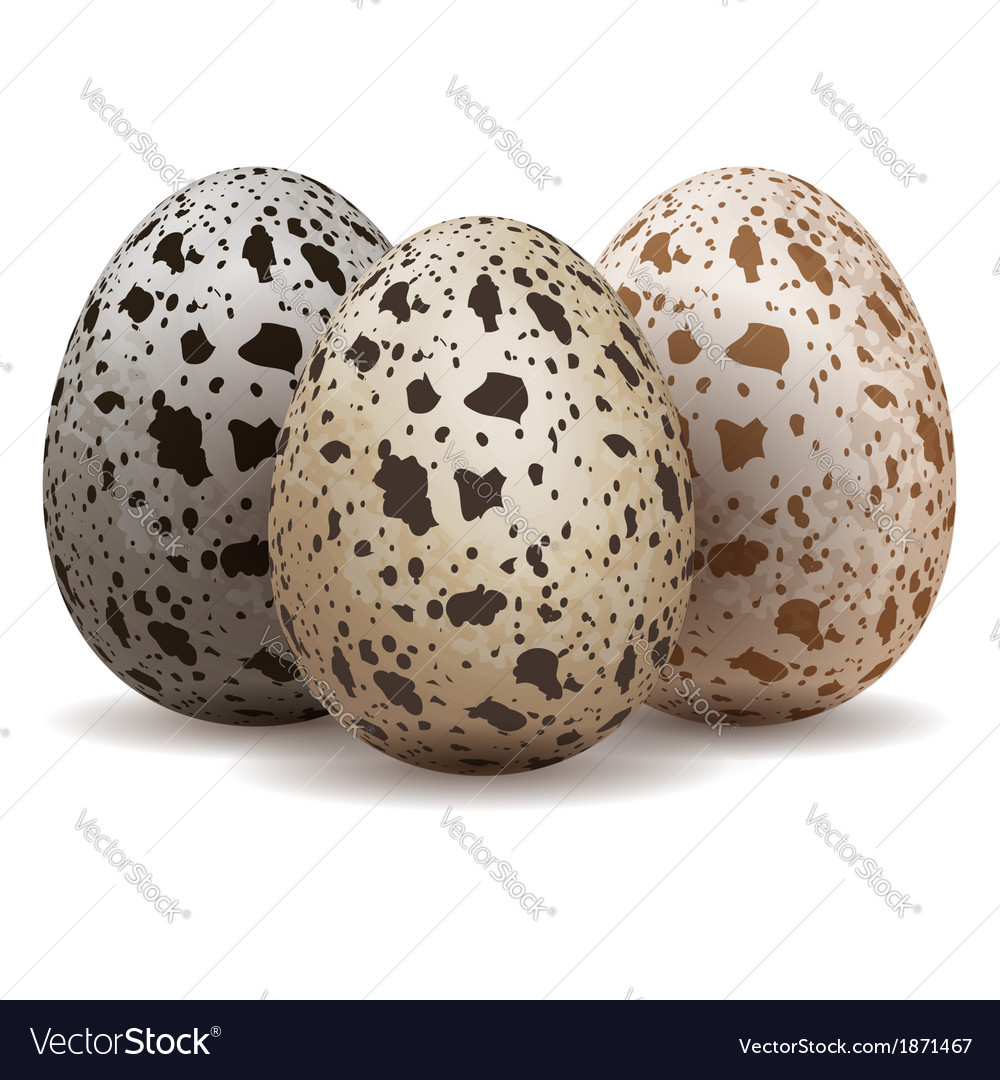 Three quail eggs vector | Price: 1 Credit (USD $1)