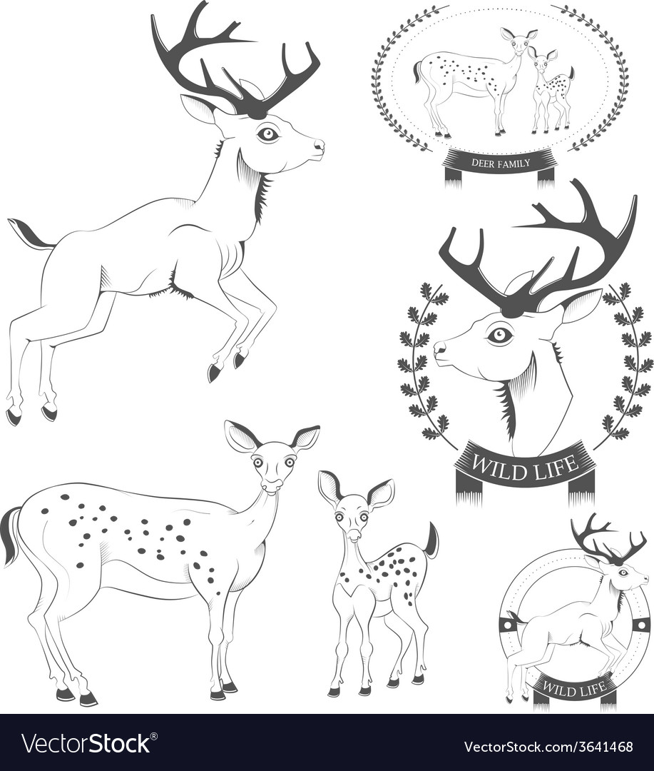 Set of vintage deer emblems labels logo vector | Price: 1 Credit (USD $1)