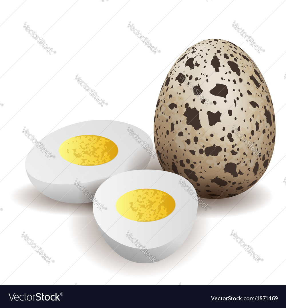 Three quail egg egg vector | Price: 1 Credit (USD $1)