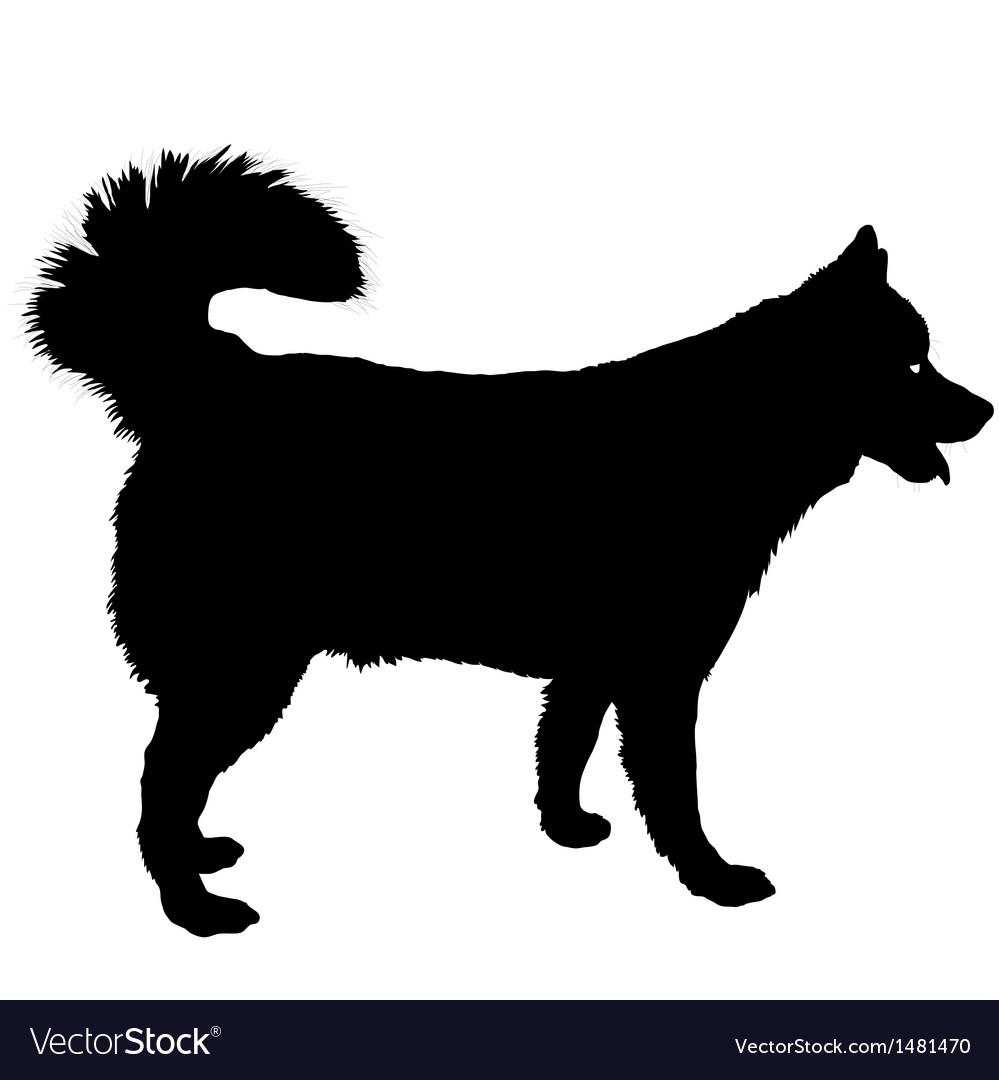 Husky silhouette vector   Price: 1 Credit (USD $1)