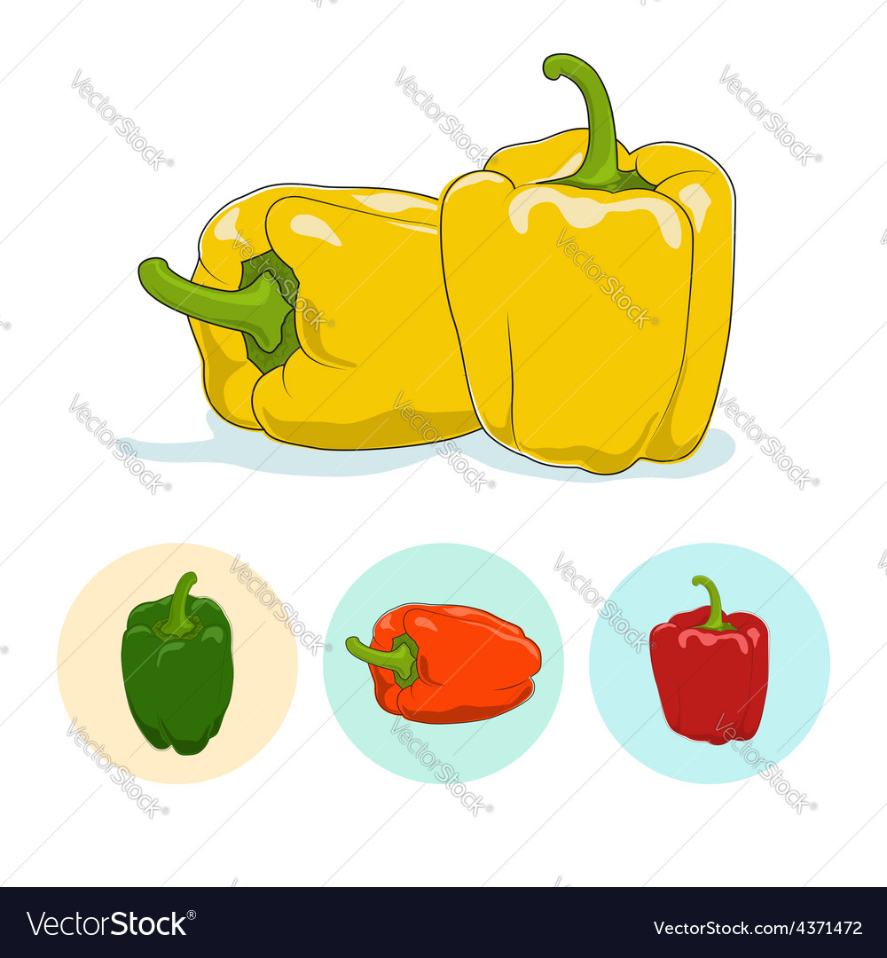 Icons bell peppersweet pepper or capsicum vector | Price: 1 Credit (USD $1)