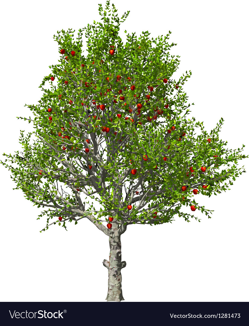 Apple tree isolated vector | Price: 1 Credit (USD $1)