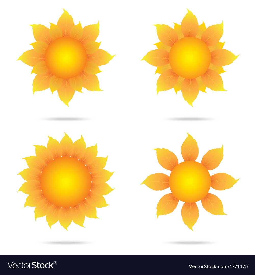 Eco sunflower set vector | Price: 1 Credit (USD $1)