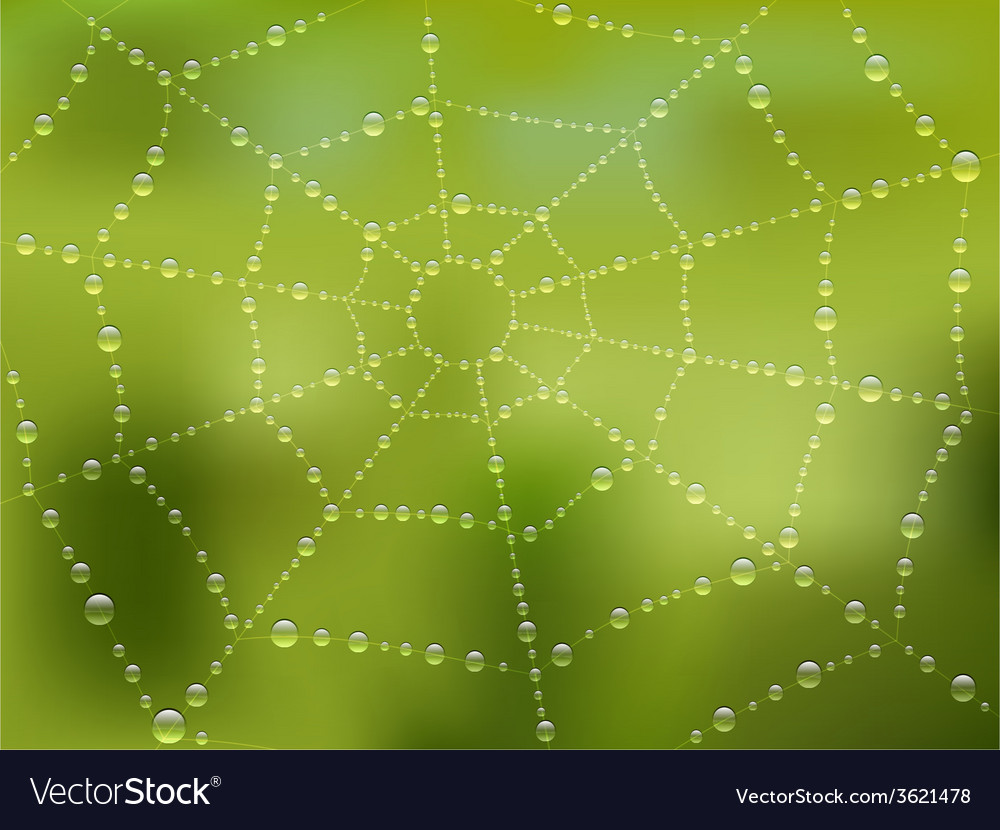 Dew drops on the web with nature background vector | Price: 1 Credit (USD $1)