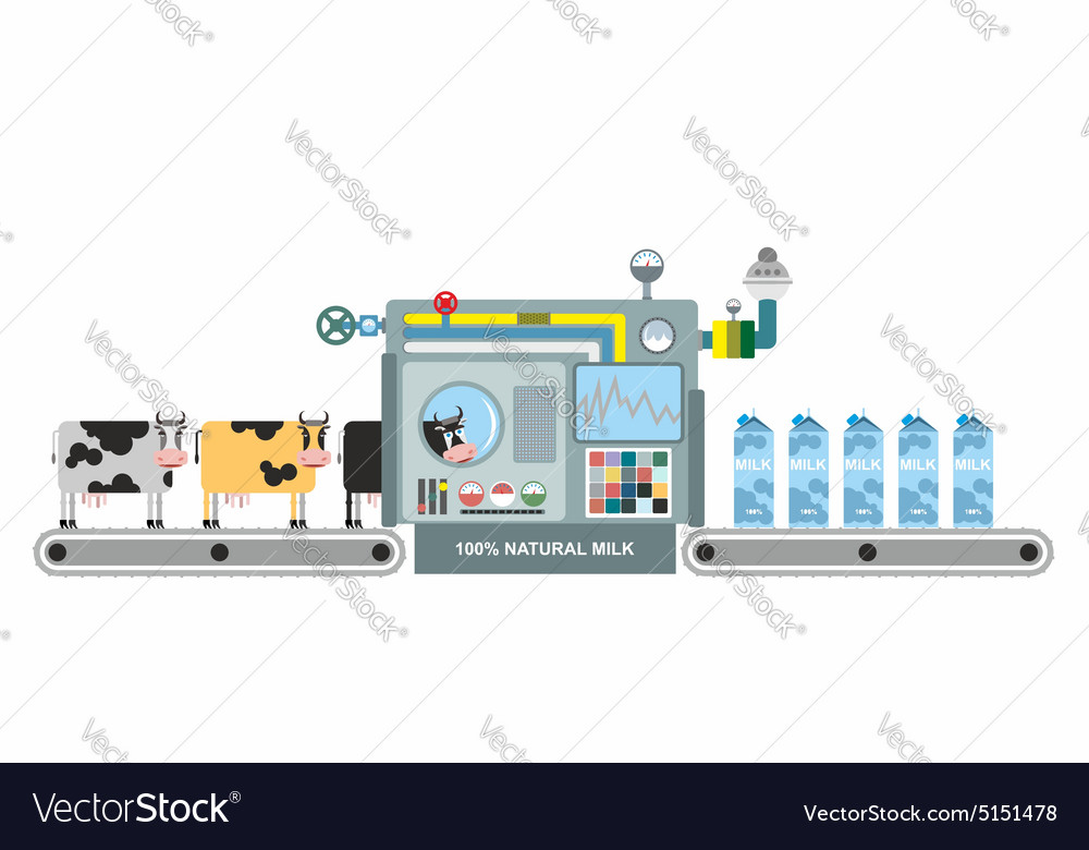 Infographics milk production stages of milk vector