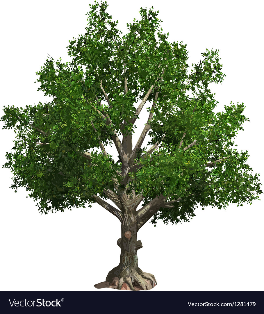 Tree isolated vector | Price: 1 Credit (USD $1)