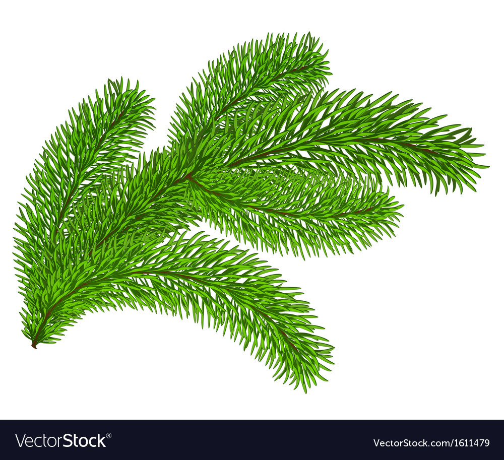 Twig of evergreen vector | Price: 1 Credit (USD $1)