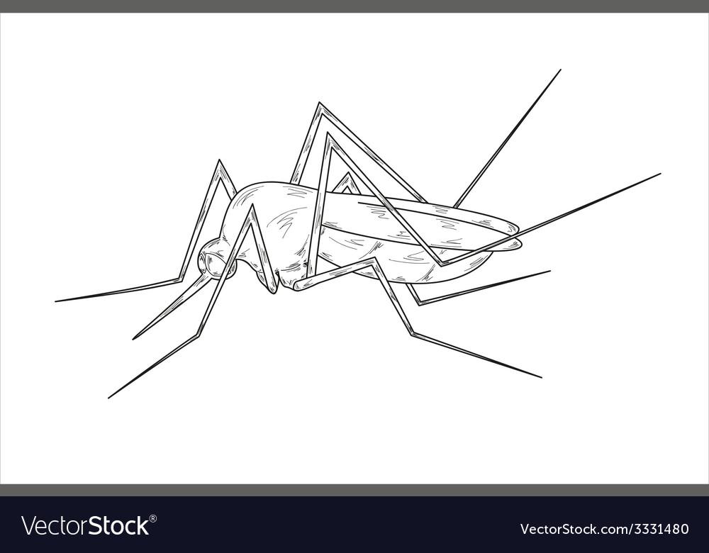Mosquito sketch vector | Price: 1 Credit (USD $1)