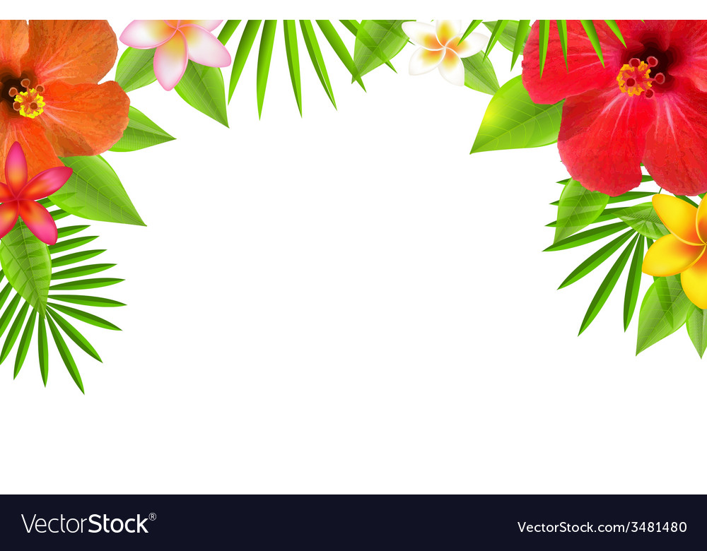 Tropical flowers border vector | Price: 1 Credit (USD $1)