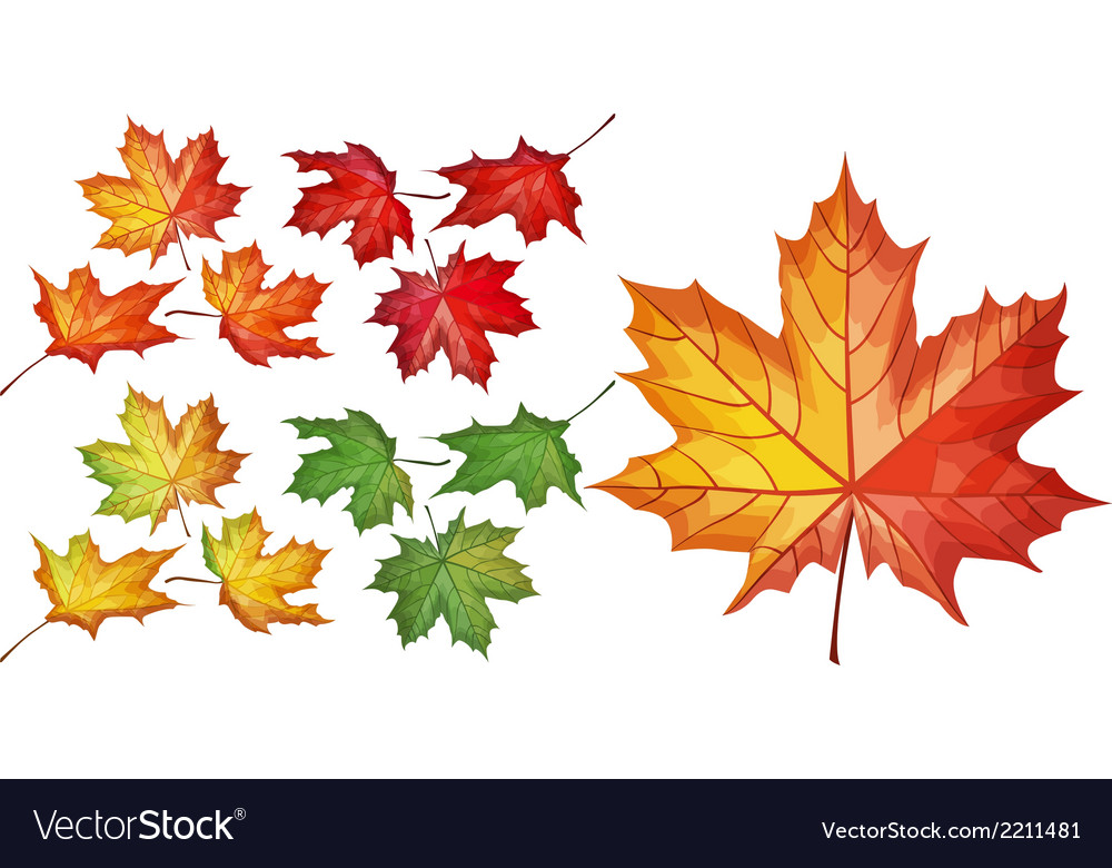 Set with maple leaves vector | Price: 1 Credit (USD $1)