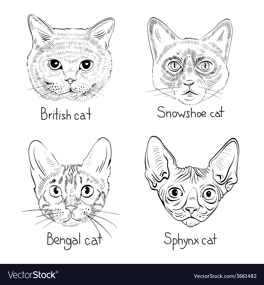 Drawing cats icons vector | Price: 1 Credit (USD $1)