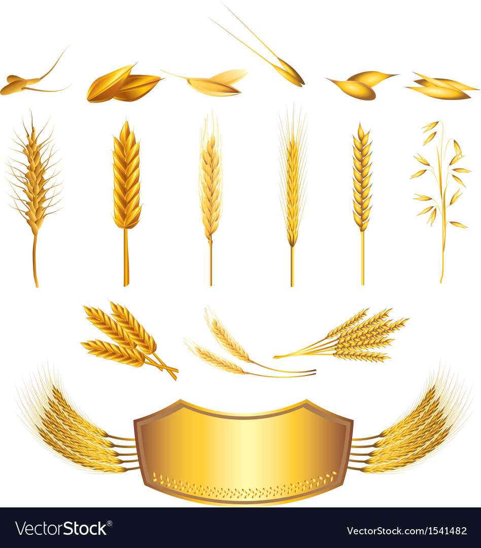 Wheat set vector | Price: 1 Credit (USD $1)