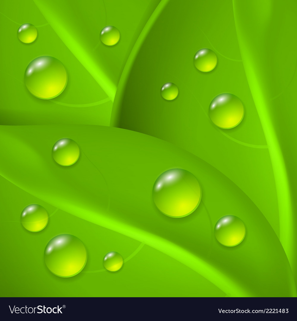 Green background with leafs and drop of dew vector | Price: 1 Credit (USD $1)