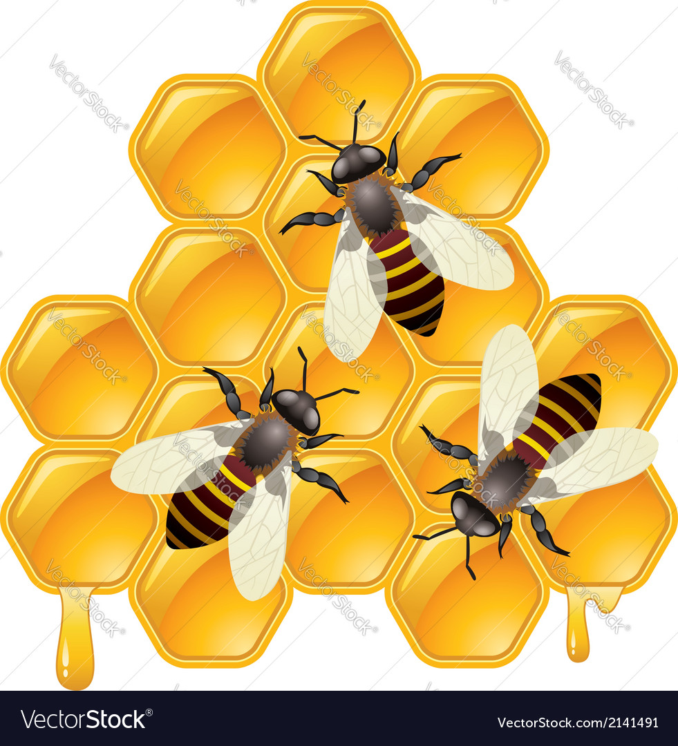 Bees on honeycells vector | Price: 1 Credit (USD $1)