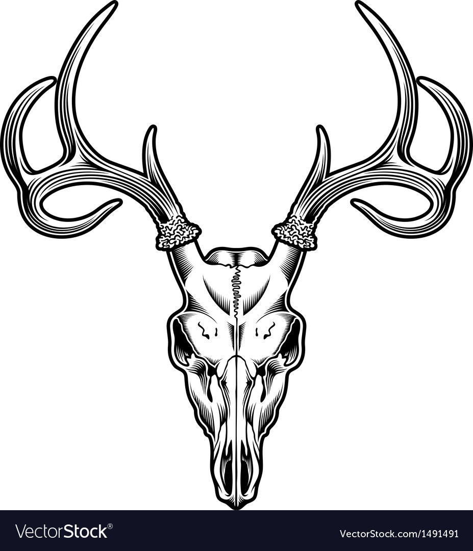 Deer skull vector | Price: 1 Credit (USD $1)