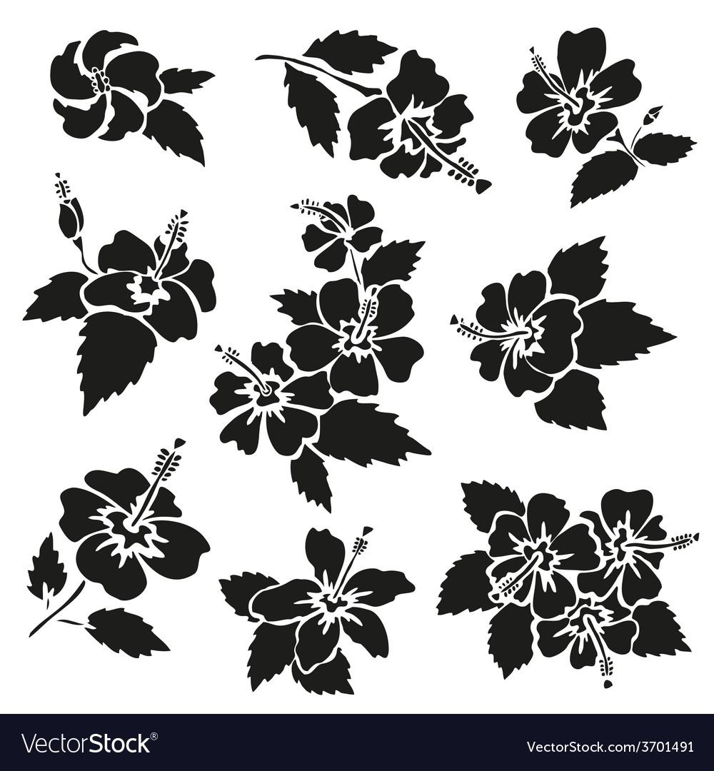 Hibiscus vector | Price: 1 Credit (USD $1)