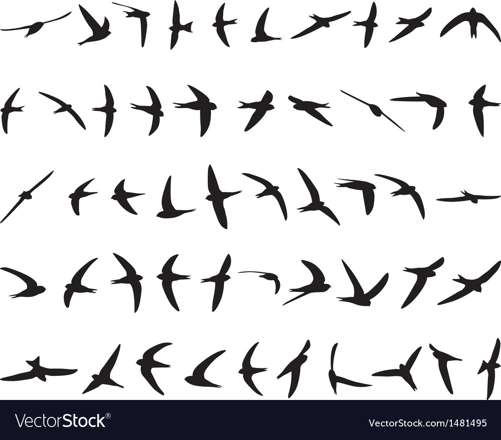 Fifty swallows vector | Price: 1 Credit (USD $1)