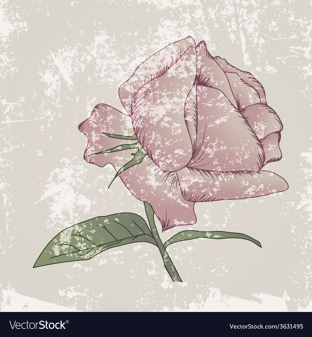 Vintage pink rose vector | Price: 1 Credit (USD $1)