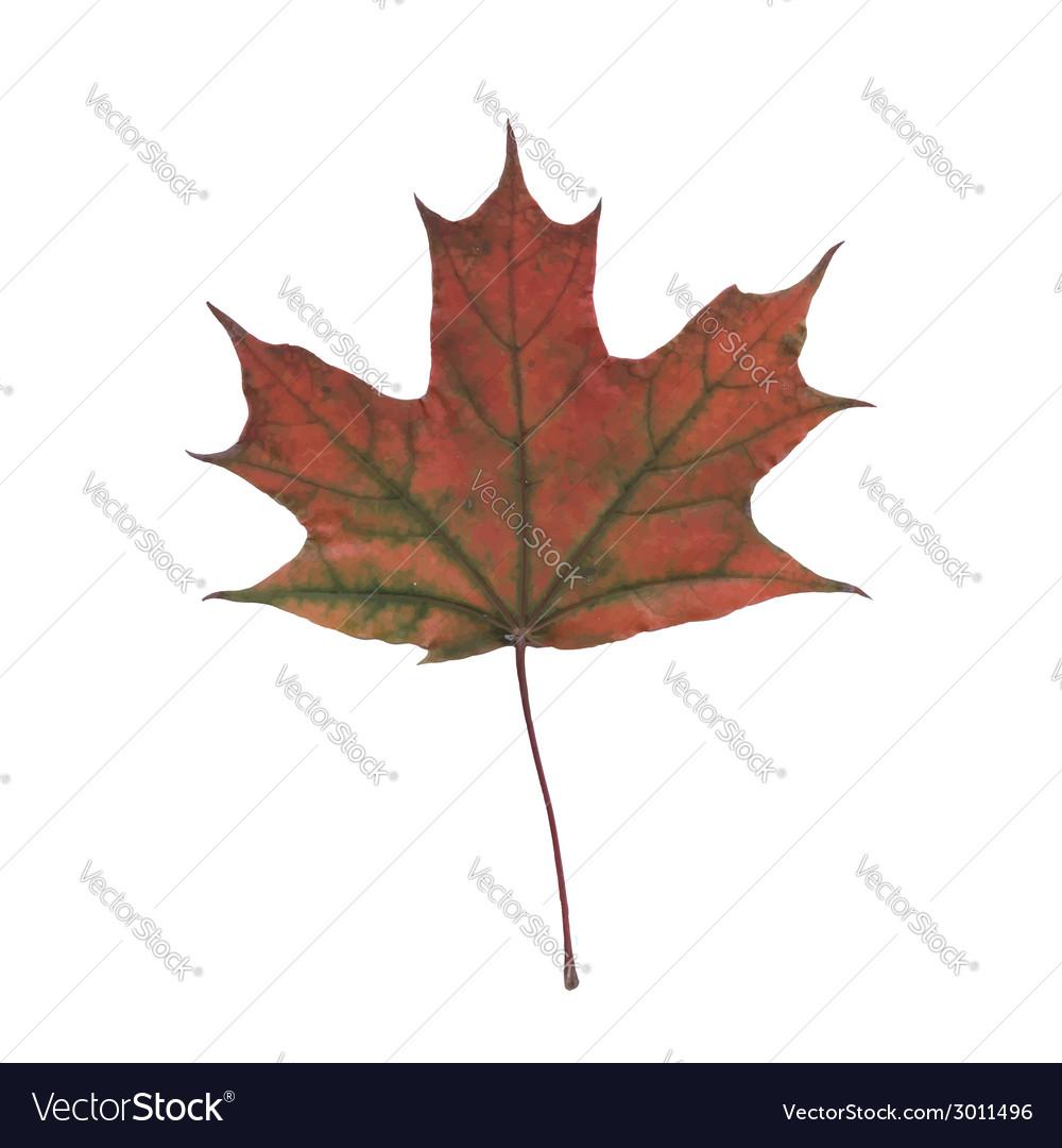 Autumn leaf vector | Price: 1 Credit (USD $1)