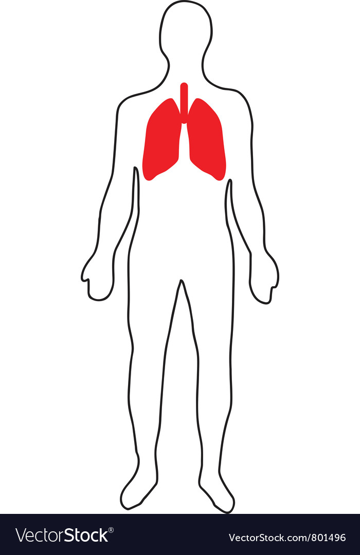 Schematic representation of the lungs vector | Price: 1 Credit (USD $1)