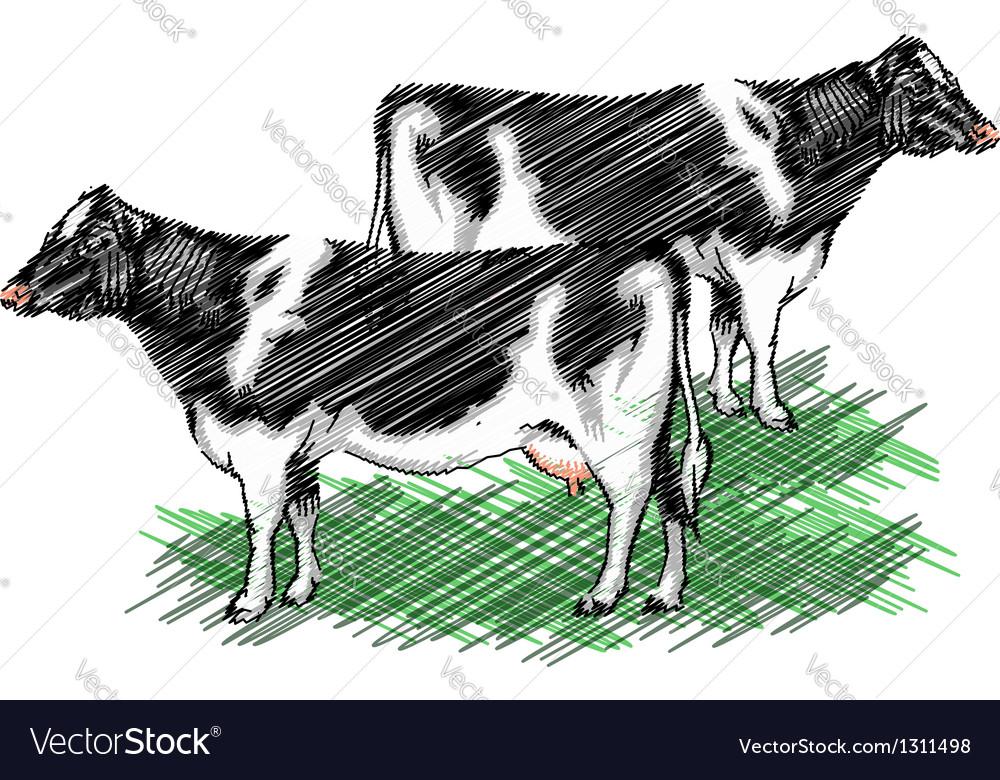 Cows vector   Price: 1 Credit (USD $1)