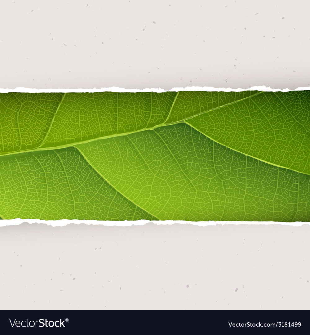Ecology abstract background vector | Price: 1 Credit (USD $1)