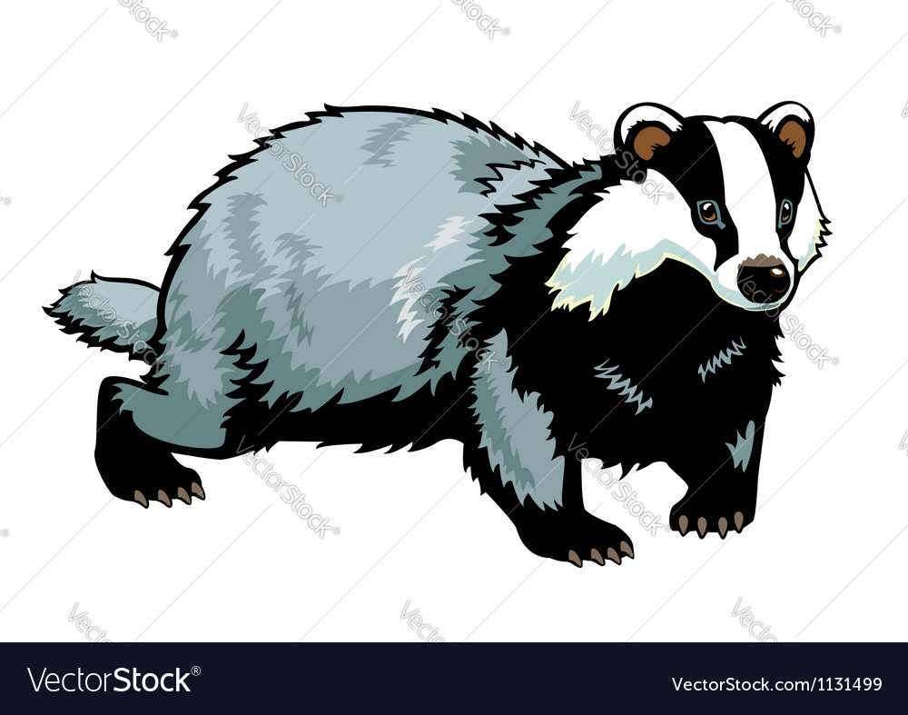 Standing badger vector | Price: 1 Credit (USD $1)