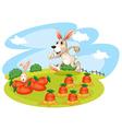 A bunny running along the garden with carrots vector