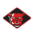 Angry bulldog head front retro vector
