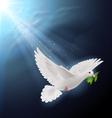 Fly dove in sunlight vector