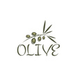 Branch of olives design template vector