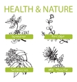 Handdrawn set - health and nature collection of vector