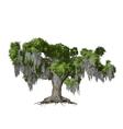 Oak tree isolated vector