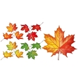 Set with maple leaves vector