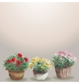 Yellow pink red flower in a flower pot beige vector