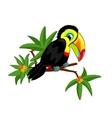 Toucan on branch vector