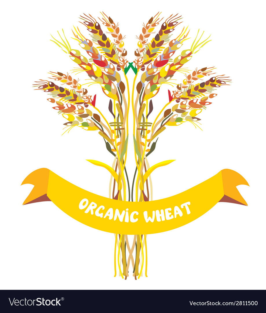 Label design for organic wheat vector | Price: 1 Credit (USD $1)