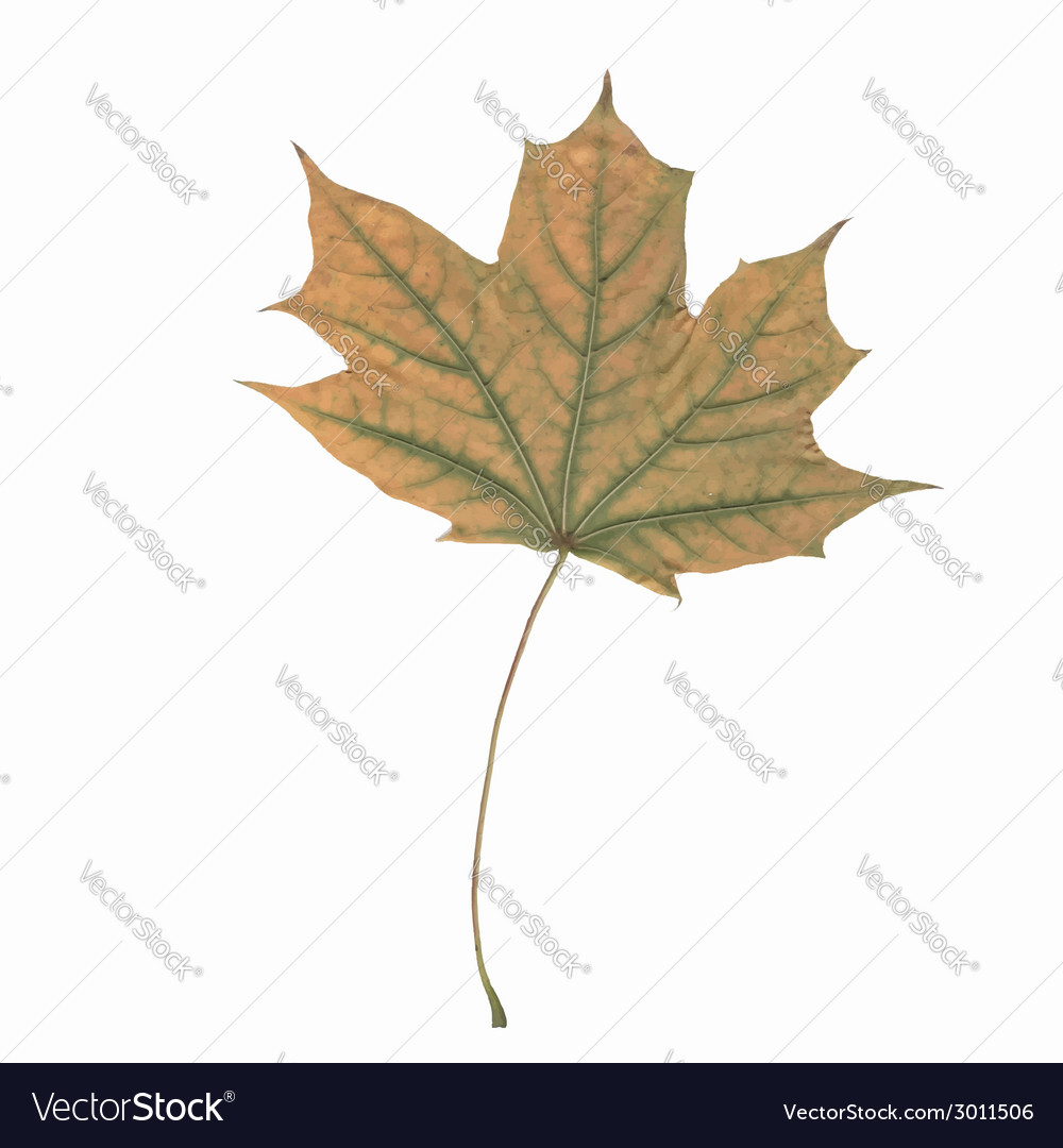 One leaf vector | Price: 1 Credit (USD $1)