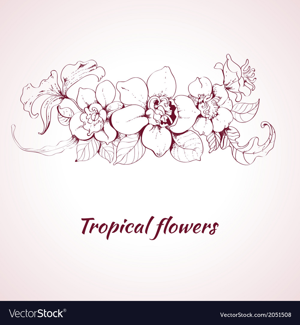 Tropical flower sketch vector | Price: 1 Credit (USD $1)
