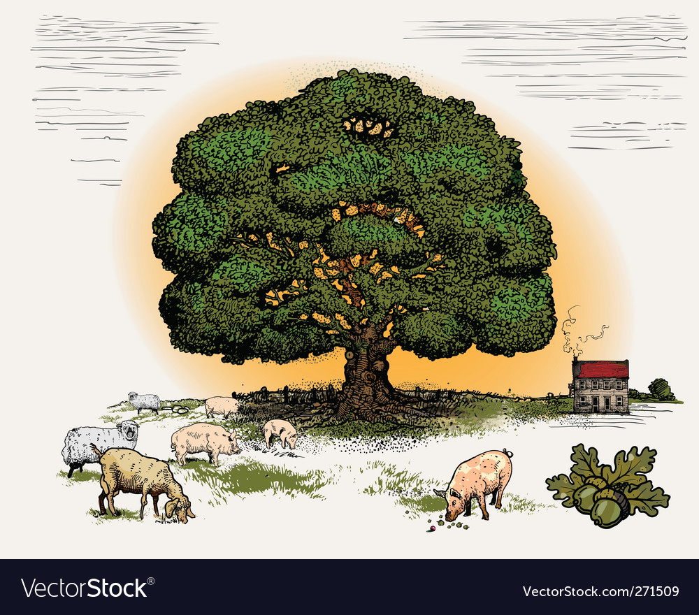 Oak tree vector | Price: 3 Credit (USD $3)