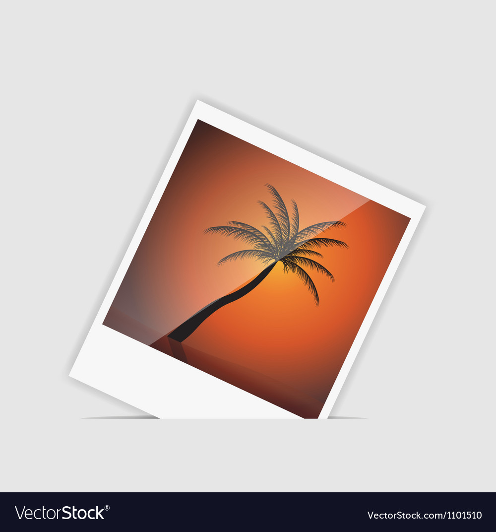 Instant photo with palm tree vector | Price: 1 Credit (USD $1)