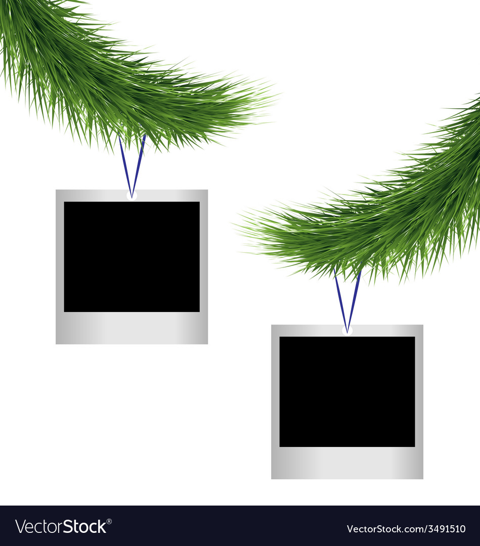 Two photoframes on pine branches vector