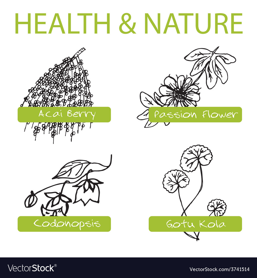 Handdrawn set - health and nature collection of vector | Price: 1 Credit (USD $1)